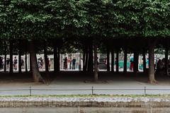 in the park   l   part2   l   2017 (weddelbrooklyn) Tags: park tree trees people dresden takingpictures tourists tourist green shadows light streets baum bäume menschen leute fotografieren touristen grün schatten licht nikon d5200