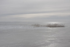 ordinary winterscape (Mindaugas Buivydas) Tags: lietuva lithuania color winter february cold frozen ice kuršiųmarios curonianlagoon reed neringa kuršiųnerija minimal minimalism mindaugasbuivydas