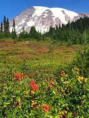 EIMR3038 (Bites N Sites) Tags: seattle washington mount rainier wild flowers