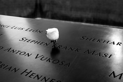 White Rose of Sadness (Torsten Reimer) Tags: flower nationalseptember11memorialmuseum usa names 911 manhattan northamerica nyc 911memorial worldtradecenter newyork newyorkcity schwarzweis blackandwhite worldtradecentermemorial unitedstatesofamerica unitedstates us