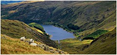 Haweswater from Mardale ill bell. (A tramp in the hills) Tags: mardaleillbell mardale haweswater lakedistrict cumbria