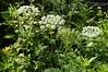 Valley Of Flowers, Uttarakhand, India (bohemian_hearttanu) Tags: flowers valley uttarakhand india himalayas travel nature photography trail ghangharia govindghat hemkund forest wilderness green rainy monsoon seasonal