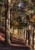 Nice place for a walk. (nondesigner59) Tags: langsett pine trees path sunlit autumn nature archives copyrightmmee eos50d nondesigner nd59