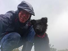 It's raining cats and dogs ☔ 🐶 (Jos Mecklenfeld) Tags: totoro rain regen dutchshepherddog dutchshepherd shepherddog shepherd hollandseherder hollandseherdershond herder herdershond hond dog hund puppy sonyxperiaz5 xperia selfie