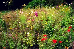 The last of the summer blooms (Peter Denton) Tags: uppark westsussex wildflowers garden southharting petersfield england southdowns canoneos100d ©peterdenton nationaltrust