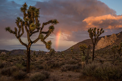 Joshua Tree Rainbow (Justin Knott) Tags: nikon d800 joshua tree national park rainbow