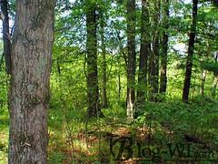 Adams Township WI Land for Sale (landmanrealty) Tags: adams township wi land for sale