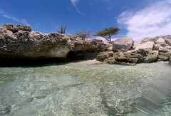 Aruba23 (ail33n_d3vlin) Tags: winner gopro aruba travel travelphotography traveling aileendevlin travelphotographer caribbean caribbeanocean caribbeansea beach water snorkeling goprophotography travelblog clearwaters palmbeach