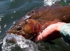 IMGP2665 (BLMIdaho) Tags: southforksnakeriver fishing boating recreation