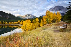 October Happy Monday From Alberta (John Andersen (JPAndersen images)) Tags: 2470 canon6d cloudy fallpond forest fortressmountain kananaskis mountains north purple sky stumps trees wedgepond yellow