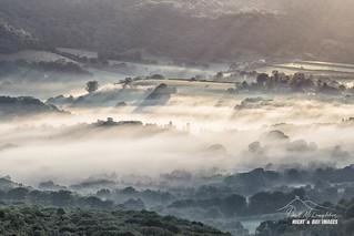 Bovey Mist