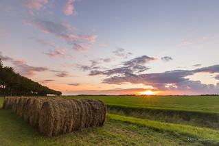 Bales of hay in the polder!