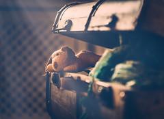 The return (cristina.g216) Tags: maleta bag equipaje luggage peluche teddy madera wood flare home casa bokeh