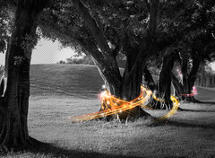 Black & light (ayman_ay17) Tags: black color design spring art graphic ayman tree taken by planet outdoor