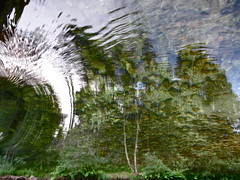 Drifting Away the Trees (andressolo) Tags: reflection reflections reflected reflect reflejos ripples reflejo río river ripple water agua trees distortions distortion distorted abstract