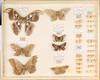 Hans D.J. Wallengren Lepidoptera 50 (Biological Museum, Lund University: Entomology) Tags: lepidoptera wallengren saturniidae cricula hemileuca hyalophora attacus drepanidae drepana platypteryx watsonalla sabra