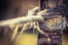 ..many ways to make a fence.. (dawn.tranter) Tags: fencefriday dawntranter closeup bamboo rope