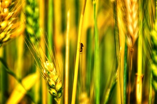 Nature Animal Wildlife Insect Growth Ant Close-up Field Nsnfotografie Summer Summertime Cereal Plant Rural Scene Agriculture Grass Beauty In Nature Green Color Nature Landscape Landscape_Collection Landscape_photography Freshness Growth Tranquility Harmon