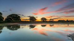 Mogshade Dawn (nicklucas2) Tags: newforest mogshade pond water reflection tree cloud sunrise landscape
