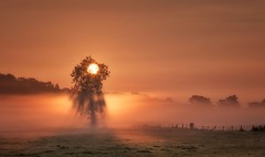 Tree of Light (Captain Nikon) Tags: sunrise misty mist silhouette rays rural leicestershire shepshed atmospheric moody golden commute morningglory landscapephotography explorenumber1 explore explored