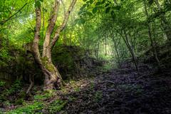 A tree (Petr Sýkora) Tags: skryje kameny les výlet nature tree forest rocks green outdoor trip