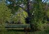 sycamore (severalsnakes) Tags: kansas pentax rokinon8514 saraspaedy shawnee shawneemissionpark k1 manualfocus sycamore