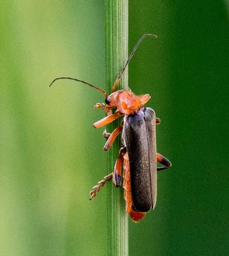 Bug ©  Andrey