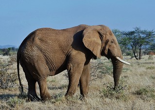 World Elephant Day August 12th