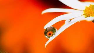 Orange Macro - 5534