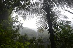Cascade du Bras d'Annette (RarOiseau) Tags: laréunion forêt sentier vert cascade pluie saintbenoît v2000