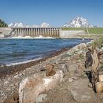 Lake Jackson Dam (Grand Teton National Park) thumbnail