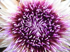 Saskatoon Berry Farm Autumn 2017 123 (Mr. Happy Face - Peace :)) Tags: gardening fall autumn art2017 harvest cans2s albertabound yyc flower floral canada150years saskatoonfarm okotoks alberta canada marcomonday brilliant