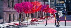 2017 - Montreal - Urban Forest (Ted's photos - Returns Late November) Tags: 2017 canada cropped montreal nikon nikond750 nikonfx tedmcgrath tedsphotos vignetting quebec montrealquebec red redrule piano art publicart sculpture bollards tables benches urbanforest forest urbanforestmontreal montrealurbanforest people peopleandpaths cans2s widescreen wideangle