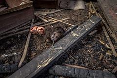 IMG_3835_6_tonemapped (Wolf Jan) Tags: lost verlassen abandoned vertrekken urbex urban puppen puppenfabrik fabrik doll fabrique
