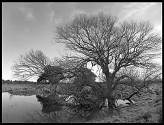 At Taylor's Pond (radspix) Tags: mamiya 645 1000s 35mm sekor c f35 bergger pancro 400 pmk pyro breath taking landscapes