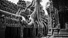 Ta Prohm temple (David Ruiz Luna) Tags: taprohm temple angkor siemreap cambodia camboya siemriep ruins unesco worldheritage laracrofttombraider film película khmer templo patrimoniodelahumanidad archaeological arqueológico khmerempire asia viaje trip travel southeastasia suresteasiático indochinapeninsula penínsuladeindochina turismo touring tourism touraroundtheworld jemer complejoarquitectónico architecturecomplex monument history atracciónturística touristsites cultura culture monumentoshistóricos historicalmonument raíces roots tree árbol jungle jungla blackandwhite blancoynegro monochrome monochromatic