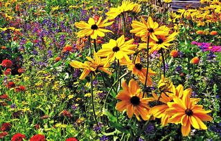 Sommerblumenwiese , 75413/8853