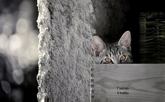 7 bottles (ELtano86) Tags: cat gatto gatti kitten occhi eyes d800 bw bottles 6