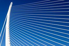 Assut de l'Or Bridge (michael_hamburg69) Tags: valència spain spanien valence espagne ciutatdelesartsilesciències ciudaddelasartesylasciencias stadtderkünsteundderwissenschaften architekt architect santiagocalatrava félixcandela cityofartsandsciences españa pontdelassutdelor bridge brücke