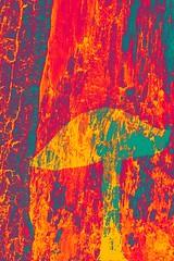 A Possibilty for Mushrooms-4 (Nickz3) Tags: 2017 clingendael denhaag mogelijkheid paddenstoel paddestoelen