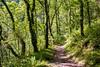 East Lyn valley path (stuleeds) Tags: eastlynriver falls nationaltrust river watersmeet