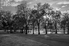 Looking Black and White (brev99) Tags: tamron28300xrdiif d610 photoshopelements12 trees starburst f22 dxofilmpack5 blackandwhite