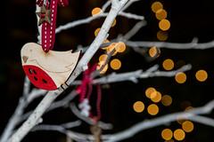 003_Suffolk Christmas stock 2016_HIGH-RES_ShowCapture.com_--« Paul Coghlin (Visit Suffolk UK) Tags: bipp britain british christmas2016 easternengland england english jpegs paulcoghlin showcapture suffolk uk visitsuffolkcommission agriculture capture christmastreefarming events forestry professional show wwwshowcapturecom ©pauljcoghlin