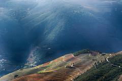 Douro Vineyards (Francisco (PortoPortugal)) Tags: 2242017 20121124fol8298a douro dourovinhateiro vinhas vineyards vinhodoporto portowine outono autumn paisagem landscape portugal portografiaassociaçãofotográficadoporto franciscooliveira