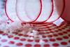 Red-White. No fries? (Gudzwi) Tags: rot rotweis red redwhite kitchen küche macromondays macromondaysmemberschoisefoundinthekitchen memberschoise memberschoisefoundinthekitchen foundinthekitchen dots punkte radieschen teller plate radish backlight durchsicht transparency durchsichtig transparent macro makro closeup nahaufnahme gemüse vegetables essen food still stilllife foodphotography