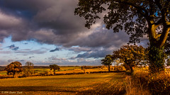 November Afternoon (Ninja Dog - 忍者犬) Tags: 2016 november winter leicestershire england english midlands uk eastnorton landscape scenery countryside rural nature natural clouds cloudscape trees oaktrees hedgerows fields nikon d7200 hdr colour light lightandshade warm serene peaceful