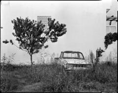 Left to Rot (BG Sixtyniner) Tags: truck pickup abandoned rotting tree tallgrass left carwreck linhof technikaiii largeformat lf analog 4x5 film black white bw nikkorw f56 135mm shift standev standdevelop rodinal adoxchs100 sheetfilm 175 canoscan 9000f vuescan