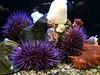 Newport Aquarium (lujeanhopkins) Tags: newportaquarium seaurchins anemones seacucumber