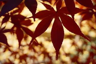 秋の九品仏浄真寺