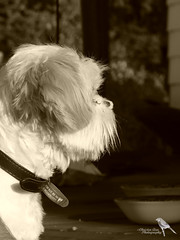 P1390169 (Christen Ann Photography) Tags: newzealand wairarapa carterton 2016 december2016 christmasholidays christmas201617 animals dog charlie